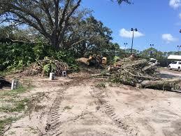 santos tree service home