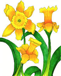 drawings of daffodils free download clip art free clip art