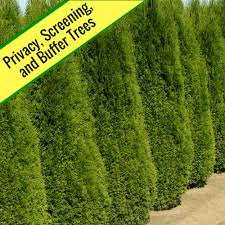 buy plants and trees free shipping 79 99