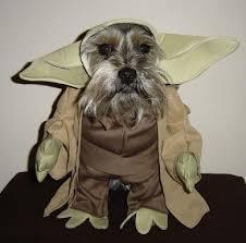 Ewok Dog Halloween Costume Schnauzer Costumes Mini Schnauzer Mini Schnauzer