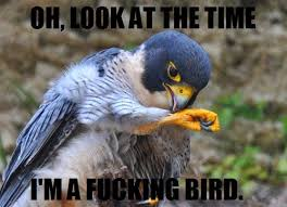 Funny Bird Memes - some helpful life hack tips let s make life great again bird