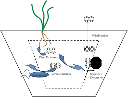 review of dissolved pollutants in urban storm water and their