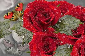 roses butterfly free image on pixabay