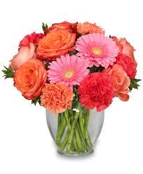 gerbera colors 10 facts about gerbera daisies
