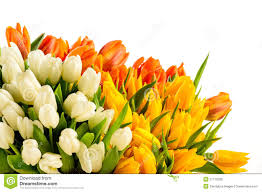 Images Of Tulip Flowers - bouquet of colorful tulip flowers spring freshness royalty free