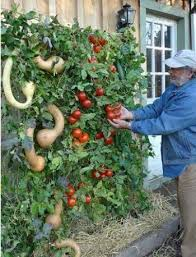 60 best gardening in and outdoors images on pinterest vegetable