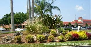 landscaping with boulders rock garden pictures and ideas