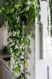 Plants Indoor indoor hanging plants indoor hanging plants that take southern