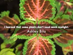 plants that don t need light 100 plants that don t need much sun 5 beautiful plants for