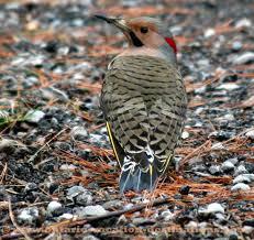 Ontario Backyard Birds Birds In Ontario