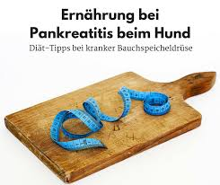 bauchspeicheldrüsenschwäche symptome ernährung bei pankreatitis beim hund mit diät tipps bei kranker