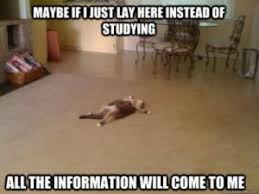 Studying Meme - study tips you should try college news