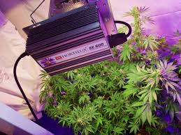 cheap grow lights for weed hortilux gives us a new generation of marijuana grow lights