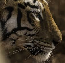 wildlife images Which is the best camera gear for wildlife photography jpeg