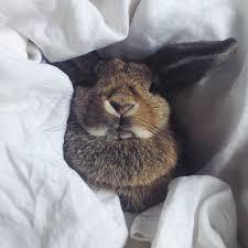 Rabbit Beds Bunny Tilvie Enjoying Her In Bed Store White Linen Cute In Bed