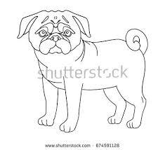pug dog stock images royalty free images u0026 vectors shutterstock
