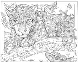 wildlife coloring book caldwell artist u0027s bestselling coloring books help inspire