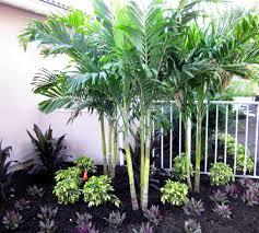 palm tree home decor trees construction landscape
