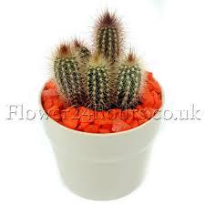Indoor Flowering Plants by Indoor Flowering Plants The Easiest Flowers To Grow Indoors