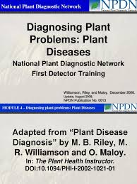Plant Disease Diagnosis - diagnosing plant problems plant diseases plant pathology
