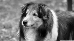 Dog Wallpapers Try The Trend Bold Black White Wallpaper Coco
