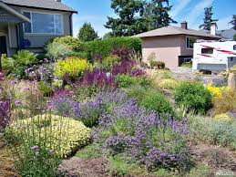 native plants texas a contemporary west coast drought tolerant garden with hidcote