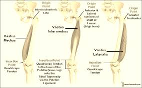 Lateral Patellar Ligament Anterior Lateral Thigh Musculature Knee Thigh Assessment