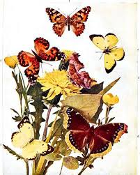 the project gutenberg ebook of the butterfly book by w j