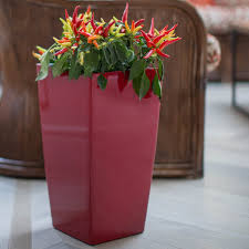 Self Watering Indoor Planters by Square Lechuza Cubico Self Watering Indoor Planter Hayneedle