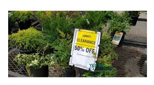 lowe s gardening clearance bushes trees more