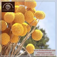 where to buy petals list manufacturers of fresh petals buy fresh petals