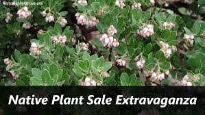 california native plant ground cover plants uc botanical garden native plant sale bay nature