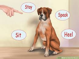 boxer dog health questions 3 ways to care for boxers wikihow