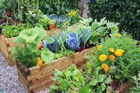 vegetable gardening vegetable gardening tips for beginners