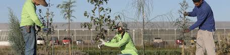 trees for you tucson electric power trees for you