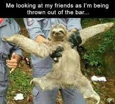 Best Sloth Memes - 33 ridiculous funny pics crazy memes sloth meme and memes