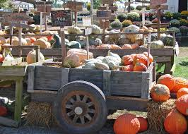 pumpkins gourds make attractive fall displays mississippi state