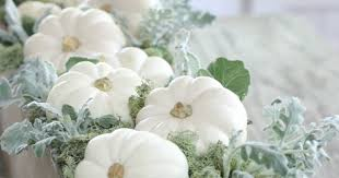 white pumpkins ciao newport white pumpkins for the table
