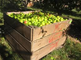 Nz Jobs Wellington by Apple Picking In New Zealand Picktheworld