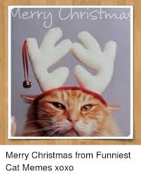 Merry Christmas Cat Meme - merry christma merry christmas from funniest cat memes xoxo
