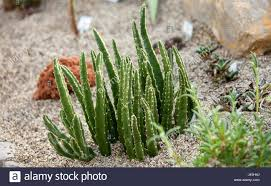 variety of succulents plants in a greenhouse stock photo royalty