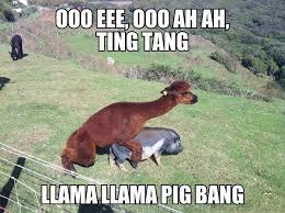 Funny Pig Memes - llama llama pig bang album on imgur