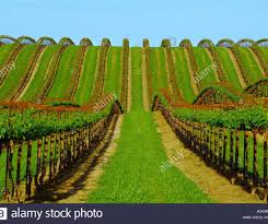 pergola grape vine trellis cute grape vine trellis ideas