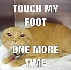 Cat Problems Meme - hahahaha exactly swimming problems competitive swimming