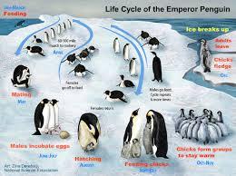 climate change threatens penguins actionbioscience