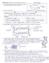 Dna Structure And Replication Worksheet Key Ib Dna Structure Replication Review Key 2 6 2 7 7 1