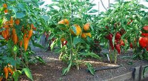 garden design garden design with natural vegetable garden tips