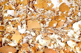 ground egg shells ground egg shells stock photo image 72489924
