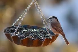 bird bath u0026 all you need to know in keeping your backyard birds happy