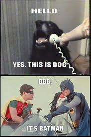 Yes This Is Dog Meme - best of hello this is dog pics smosh
